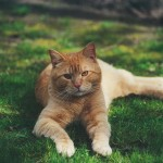 ginger_2001_04_young3