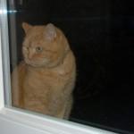 ginger_2013_01_kitchen_window