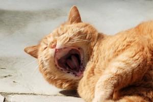 Ginger ohne Zähne