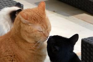 Marvi begrüßt begeistert Ginger.