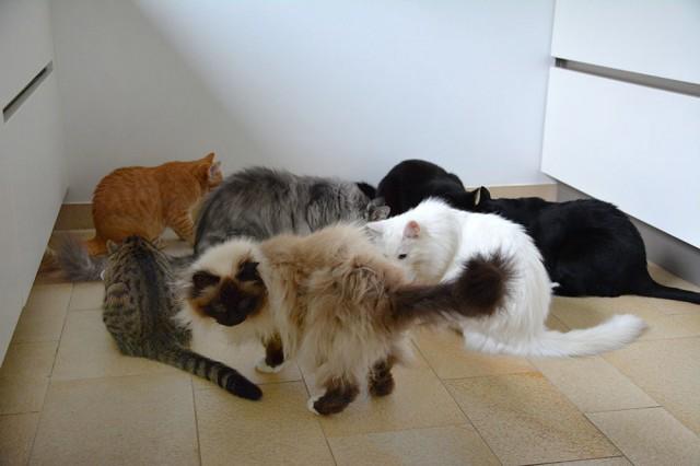 Das Katzenparade-Innenteam