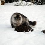 islay_snowmole_2012_12