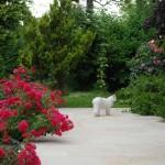 isbjoern_2012_06_terrasse