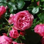 rosen_leonardo_1206