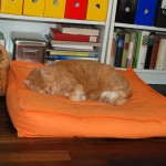 ginger_2013_02_office