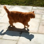 ginger_2013_04_shadow