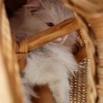 isbjoern_2013_04_inside_wicker_chair