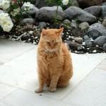 Teil 10 – Katzen und Wasser
