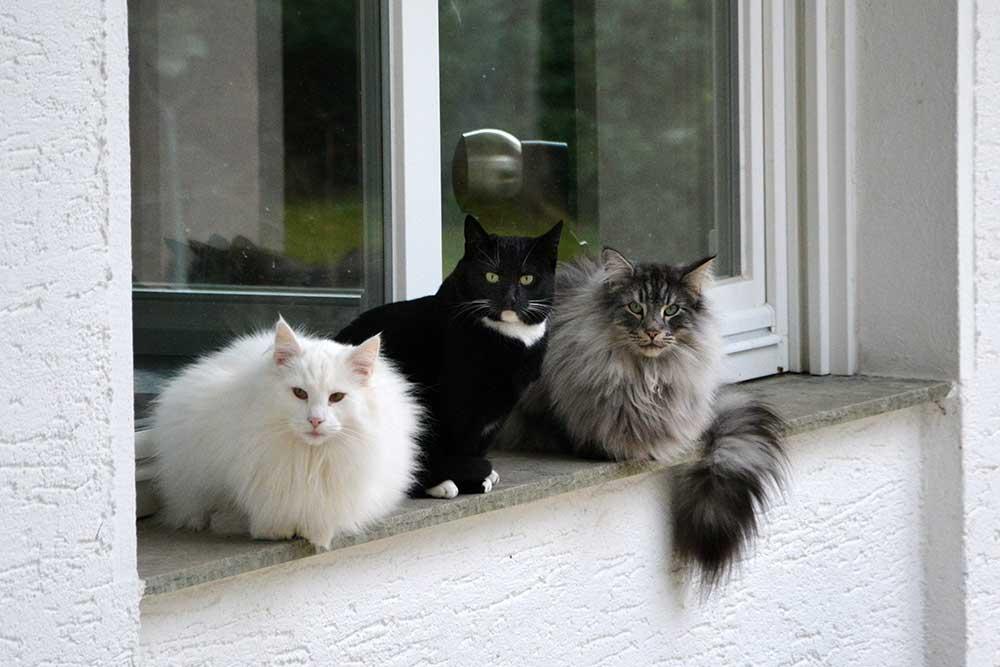 Teil 233 – Auf der Fensterbank