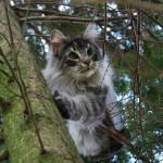 Teil 8 – Katzen und Bäume