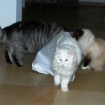 cat_in_a_bag_2012_12