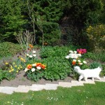Teil 107 – Das Tulpenbeet