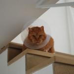Teil 38 – Sonderausgabe Ginger