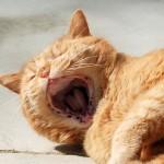 ginger_2013_04_yawn2