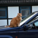 ginger_2013_06_jeep1