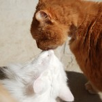 ginger_issi_2013_04_kiss
