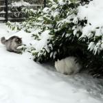 Teil 48 – Sonderausgabe: Bevor der Schnee verschwindet