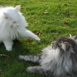 ice-b_islay_2012_12_catfight2