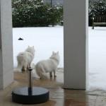 Teil 69 – Sonderausgabe: Der letzte Schnee?