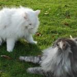 ics-b_islay_2012_12_catfight