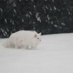 isbjoern_2013_01_snowhunter
