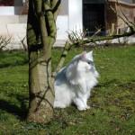 isfrid_2013_03_magnolie