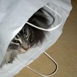 islay_2012_12_cat_in_a_bag_3