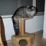Teil 56 – Der Katzenkeller