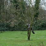 islay_2013_04_magnolie1