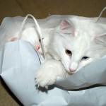 iss_ice-b_2012_12_bagged