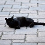 Special – Still Wanted: Name for Little Black Cat