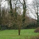 magnolie_2013_04
