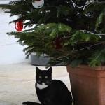 marvi_2013_12_weihnachten