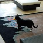 Teil 110 – Die Hauskatzen II