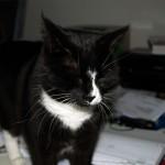 mira_officecat_2012_12
