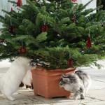 weihnachtsbaum_2012_12
