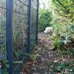 Teil 73 – Katzensicherer Garten