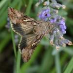 Teil 172 – Insekten