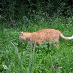 ginger_2013_07_wiese