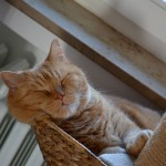 ginger_2014_02_snooze1