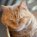 ginger_2014_02_snooze2