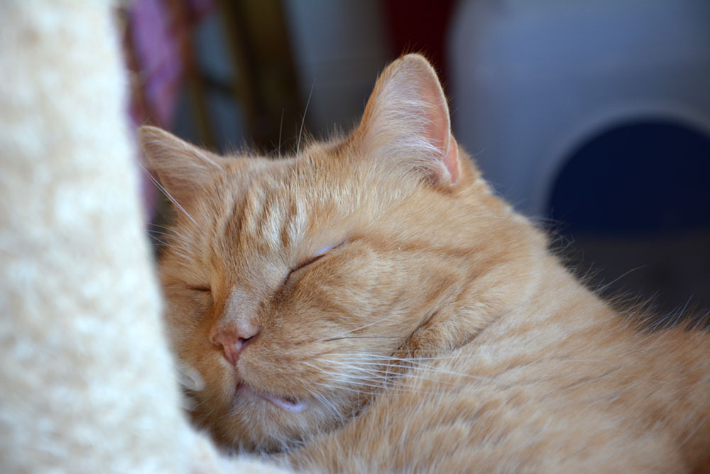 Teil 242 – Snooze
