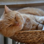 ginger_2014_02_snooze4