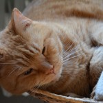 ginger_2014_02_snooze5