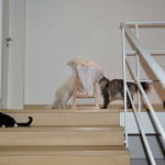 is_marvi_2013_09_treppchen3