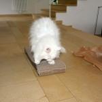 isbjoern_2014_02_cat-on1