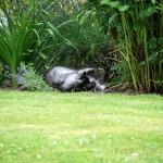 Teil 160 – Katzenminze