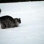 islay_snowplay_2012_12