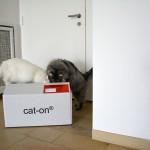 iss_islay_2014_02_cat-on