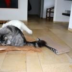 issi_islay_2014_02_cat-on1